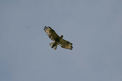Img_0005ds470