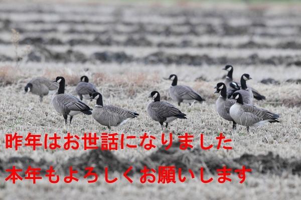 Shijukaragan8398a5900